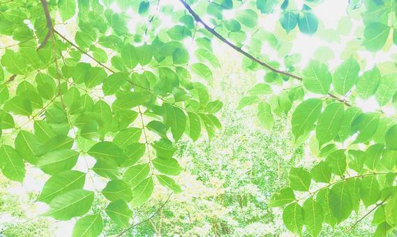 Refreshing Komorebi Background 2