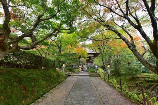 Jōjakkoji Temple Niomon Tomomiji Autumn Leaves 005