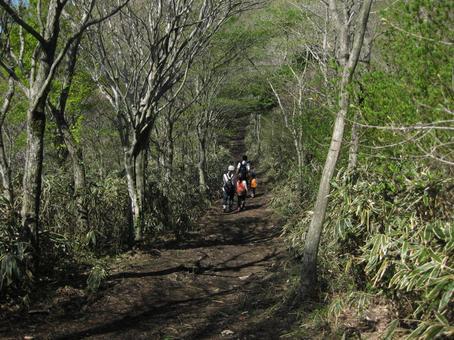 Fresh green hike