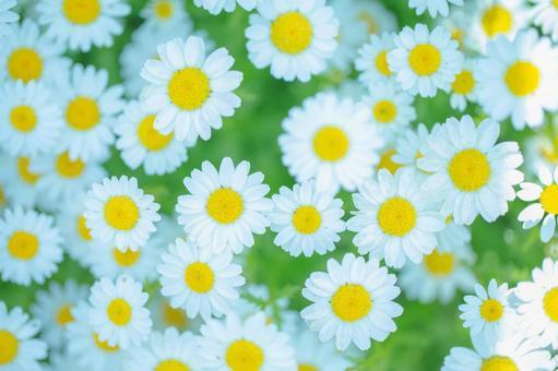 환상적인 꽃 21