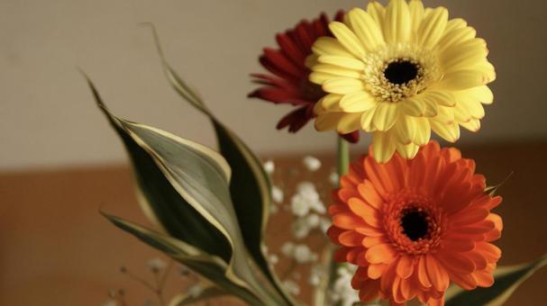 [Flowers] Gerbera Kasumi grass Celebration gift Anniversary