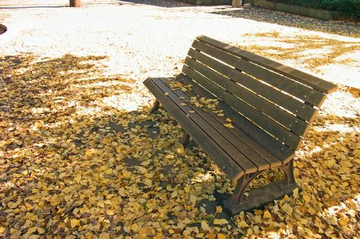 Fallen leaves and benches