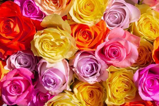 형형색색의 장미