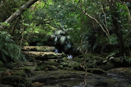 Jungle Iriomote Island