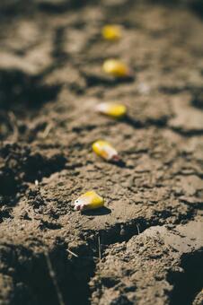 흙 위에 씨앗 2