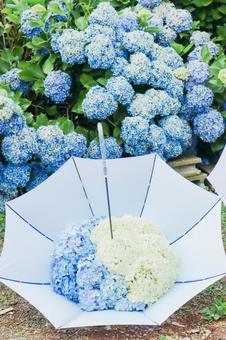 Umbrella with hydrangea ⑤
