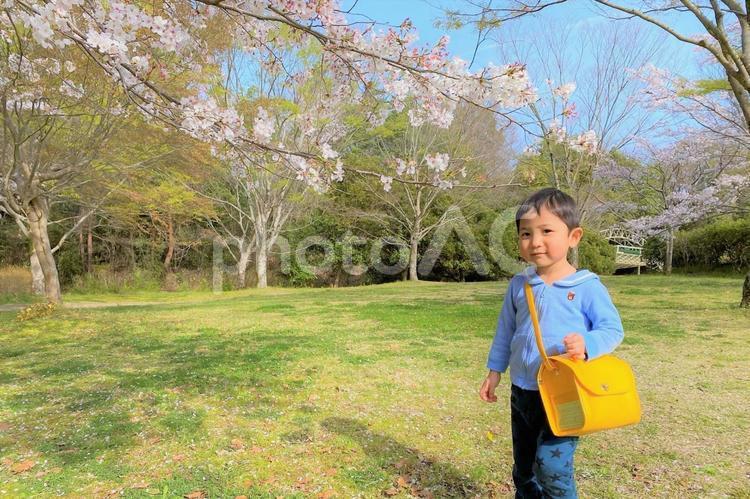 桜の花と新幼稚園生の写真