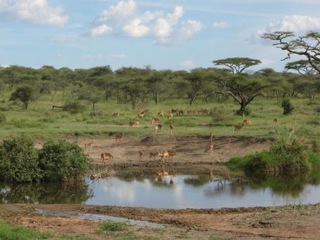 Scenery of savanna