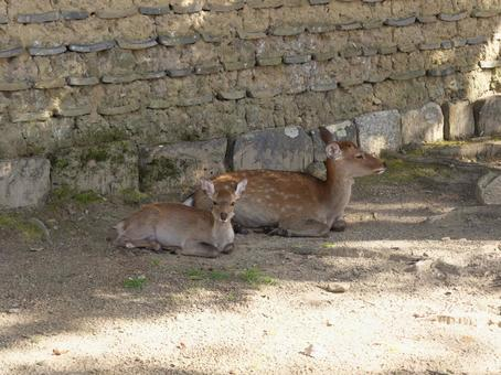 Parent and child of deer in Nara Park