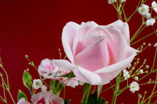 배경 소재 예쁜 핑크 장미 꽃