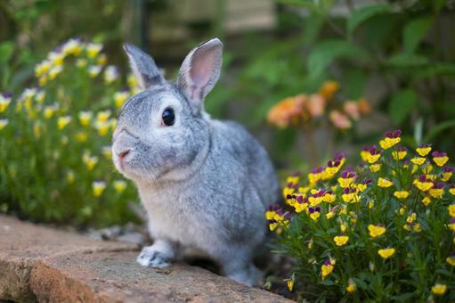 정원에서 대모험 토끼 걸 짱