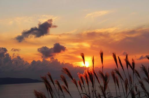 金色的潘帕斯草,天空和大海 1