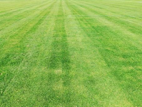 Freshly cut natural grass
