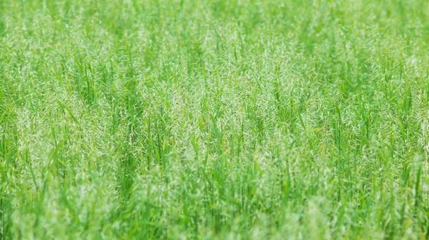 Image of summer grass