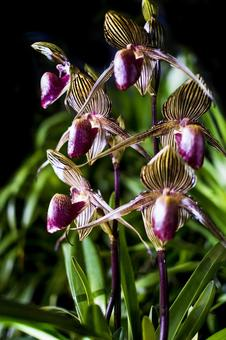 Rare orchid flower