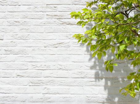 White brick background and fresh green trees