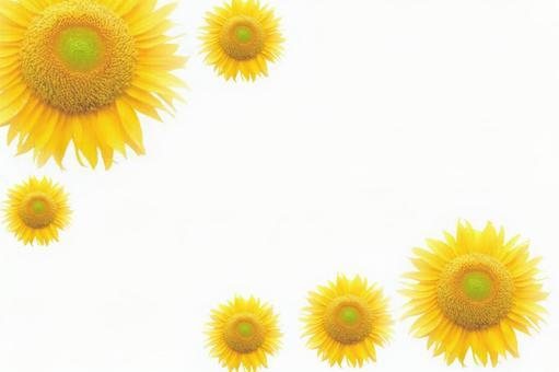 Sunflower frame flower flower frame summer