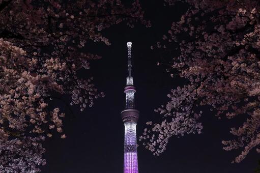 Sakura and Sky Tree