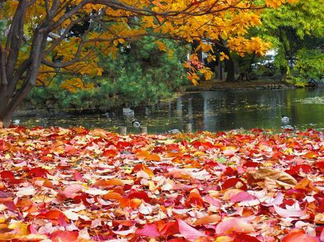 A colorful autumn season