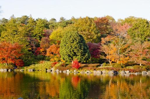 Fall scenery 11