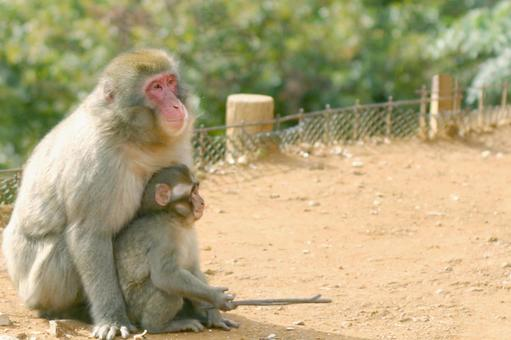 Monkey's parent and child laughing face