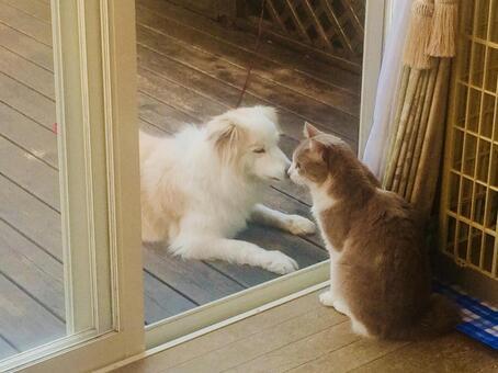 개와 고양이 키스