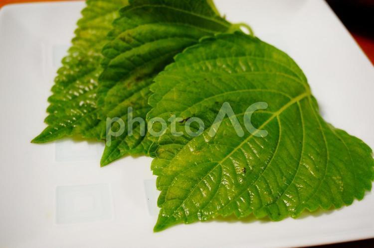 エゴマの葉の写真