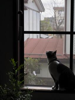 Wind chimes and cat 01