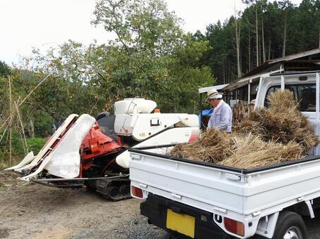 State of threshing work of rice