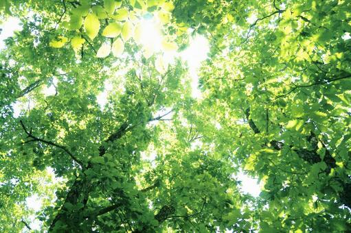 Forest green background (Komorebi) 0514