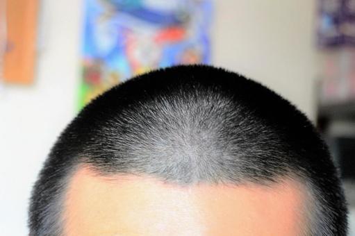 Bose head