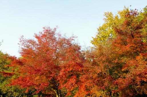 Fall scenery 19