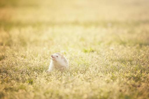 Autumn walk hedgehog