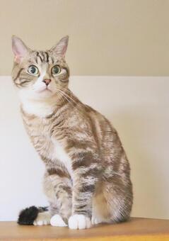 고양이 고양이 고양이 고양이 이미지 응시 고양이 궁금한 고양이 들여다 고양이