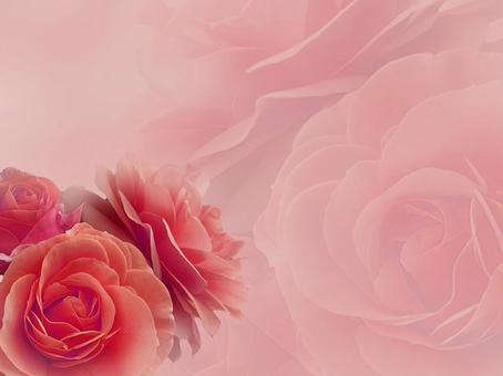 紅玫瑰背景素材
