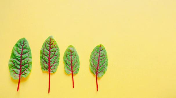 Baby leaf yellow background material 16: 9