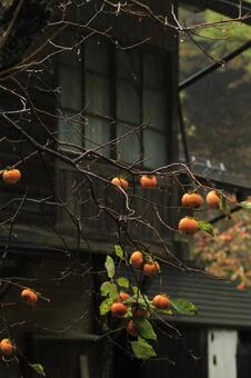 옛 민가와 감나무