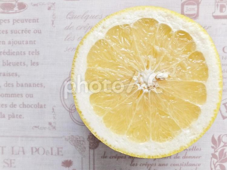 グレープフルーツ 6の写真