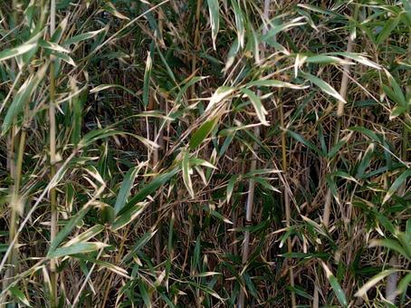 Landscape bamboo bamboo grass