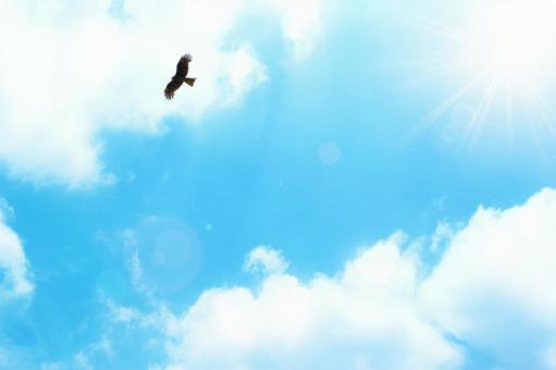Fresh sky and flying bird