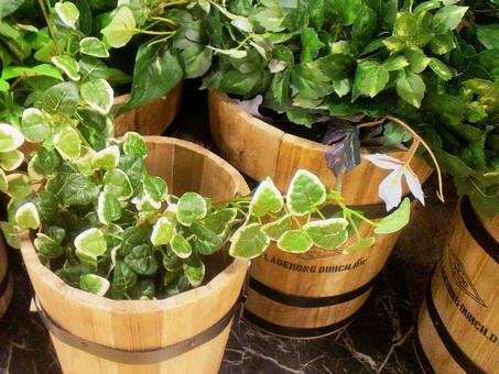 훼이 인공 관엽 식물