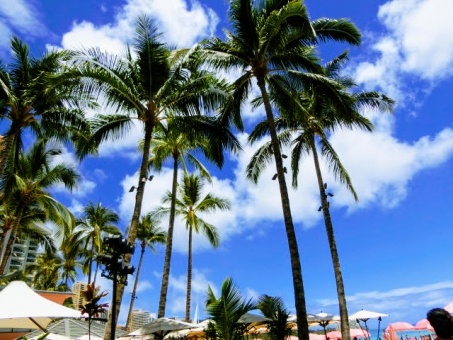하와이의 하늘과 야자수