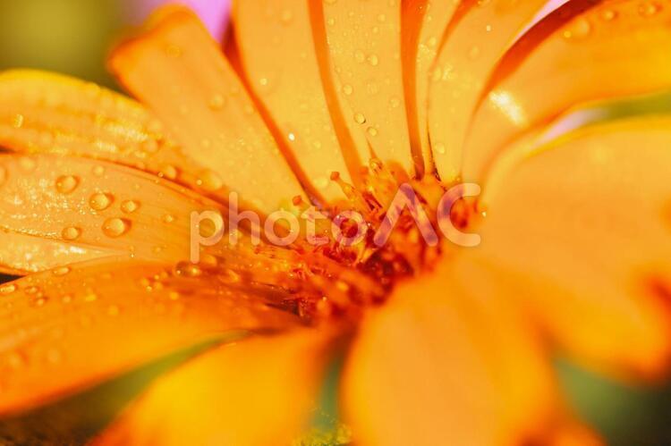 野外の花7の写真