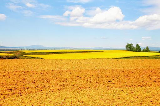 Blue sky and rape field and field