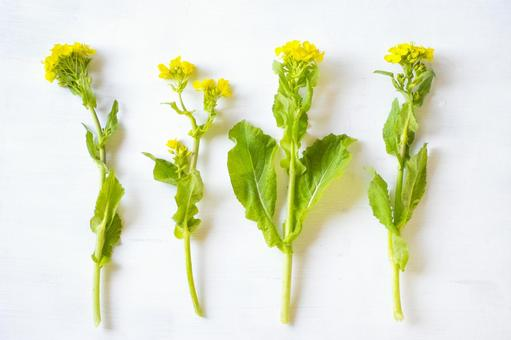 잎의 꽃 _ 흰색 배경