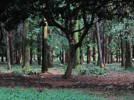Trees 1