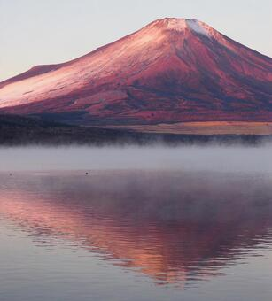 Fuji standing in the morning