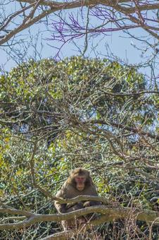 日本猴子在山上2