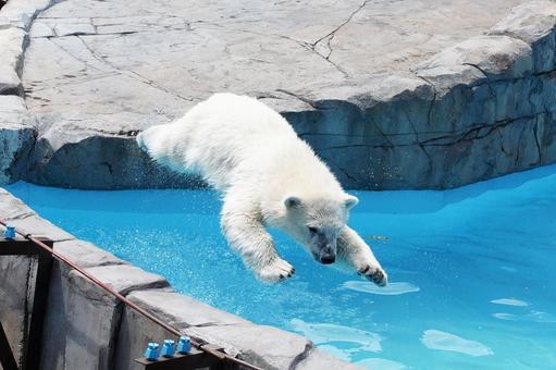 Popular Polar Bear