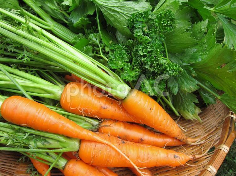 採りたて香味野菜の写真